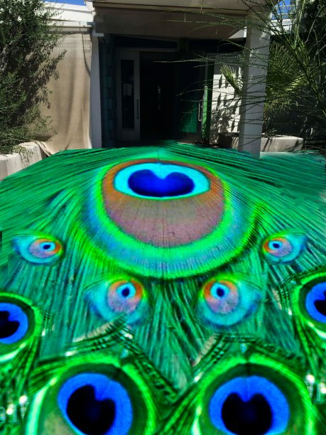grand peacock 1